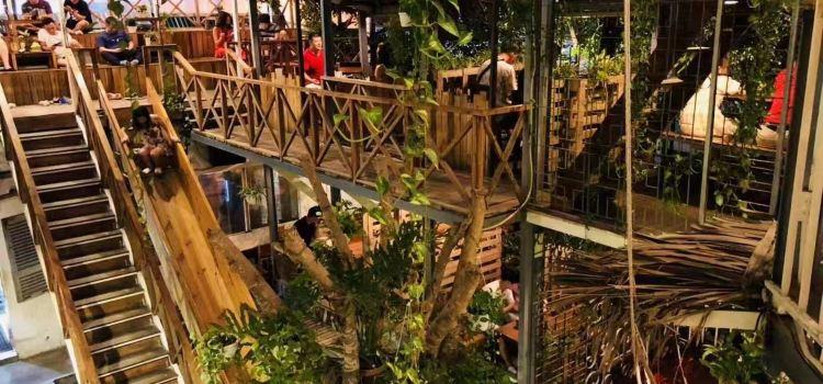 Rainforest1