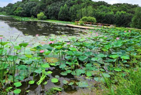 Haowang Park
