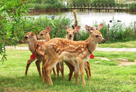Dafenggang Zoo