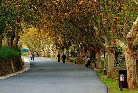 Niushoushanlvyou Sceneic Area