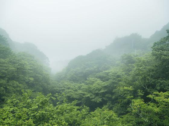 Douyan Scenic Area