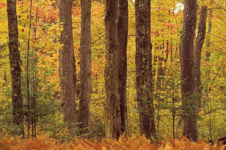 紅松林森林公園