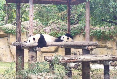 Luozhuang Zoo