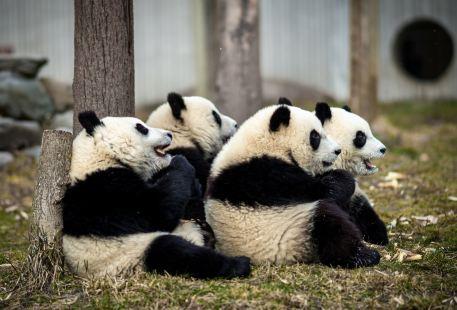 中國保護大熊貓研究中心