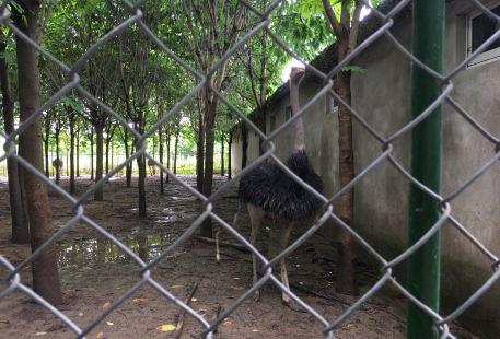 Jiangtian Zoo
