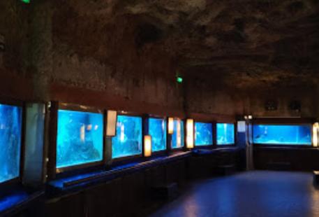 阿卡雄水族館