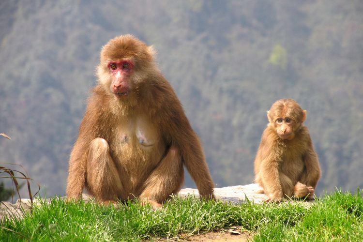 어메이산(아미산) 자연 생태 원숭이 보호구역2