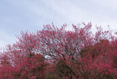 Zhenjiang Cherry Park