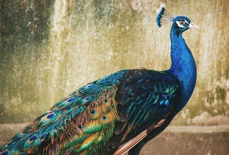 Liaokuo Mountain Zoo
