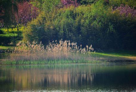 豐縣飛龍湖公園