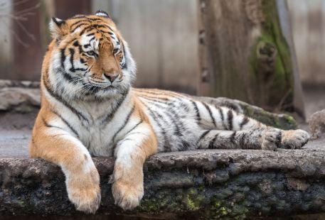 Nanshan Zoo