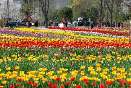 Huanglong Yihao Ecological Garden