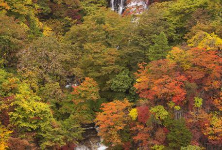 Jinzhu Waterfall Scenic Area