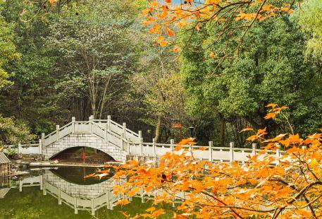 東庵森林公園