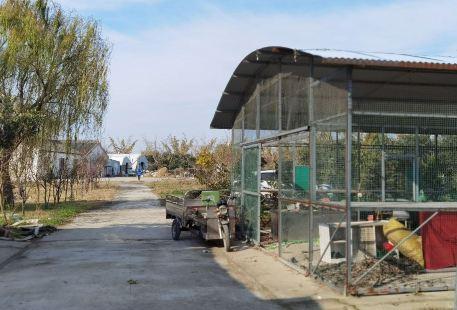 Shengtai Nongye Guihuaqu Botanical Garden