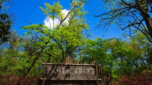 恩施坪壩營國家森林公園景區
