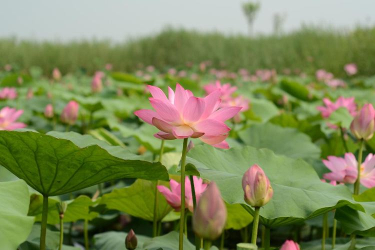 Weishan Island Scenic Area3