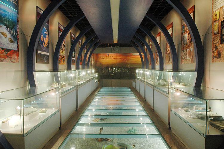 중국 지질대학 박물관1