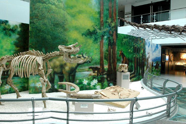 중국 지질대학 박물관