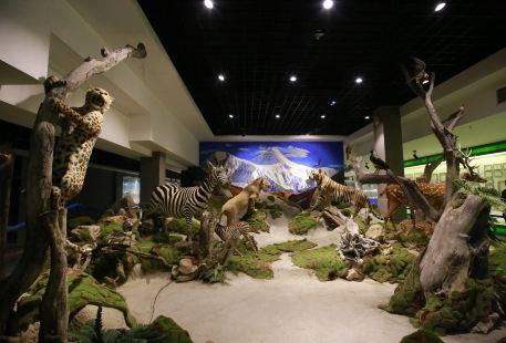 Shaanxi Nature Museum