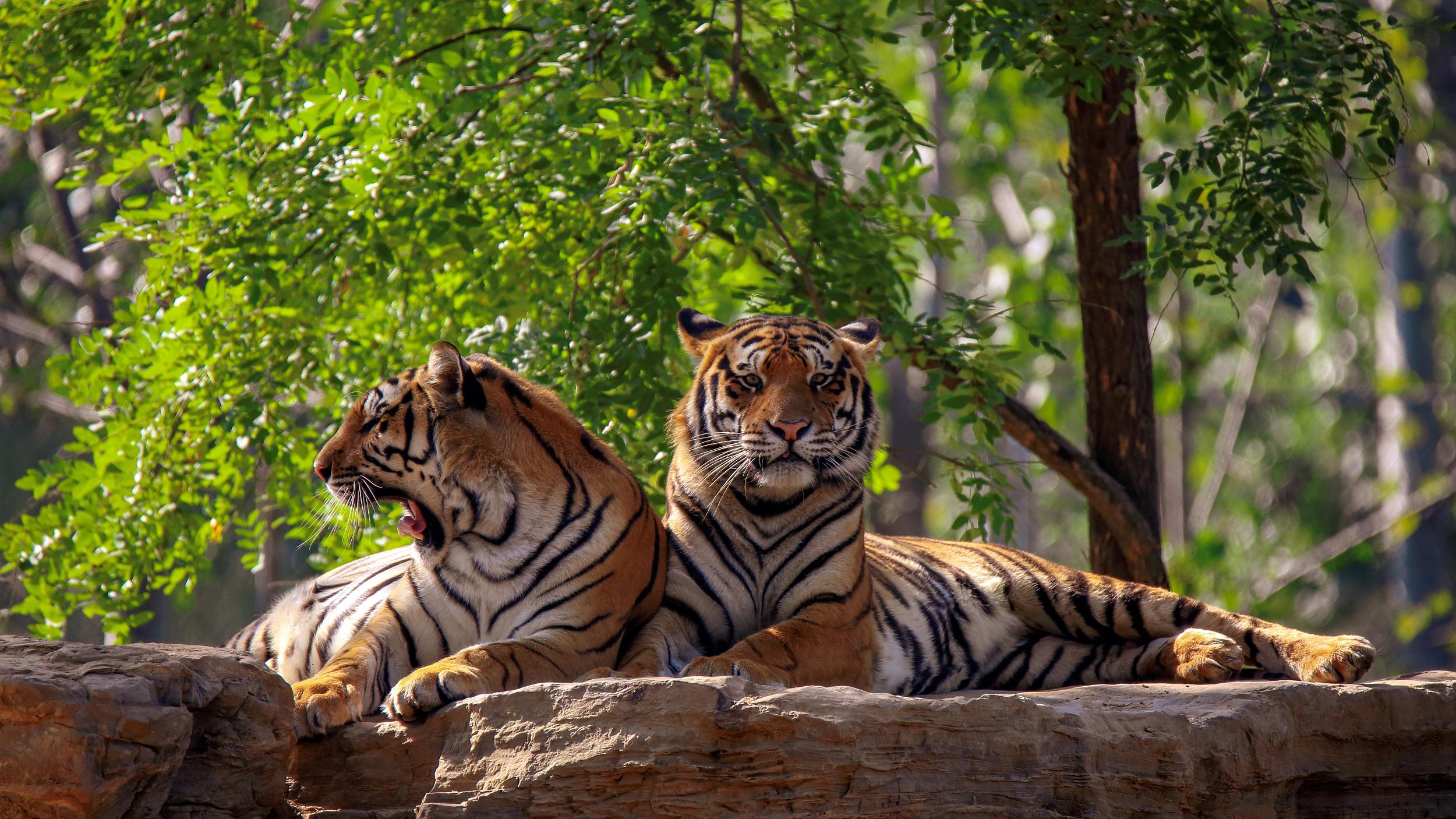 秦皇島野生動物園