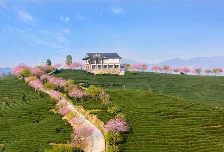 Zhangping Yongfu Flower Country