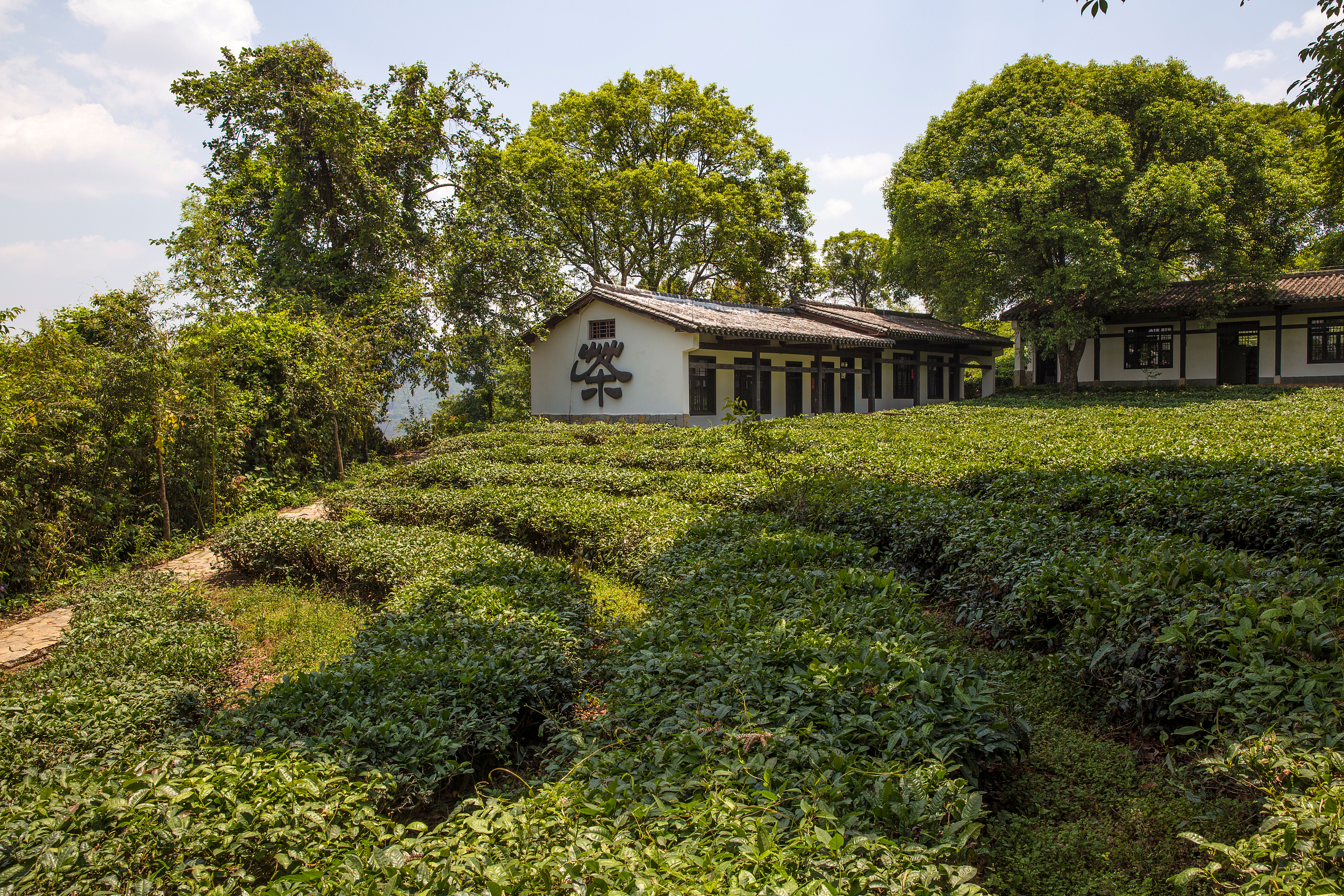 China Pu'er Tea Museum