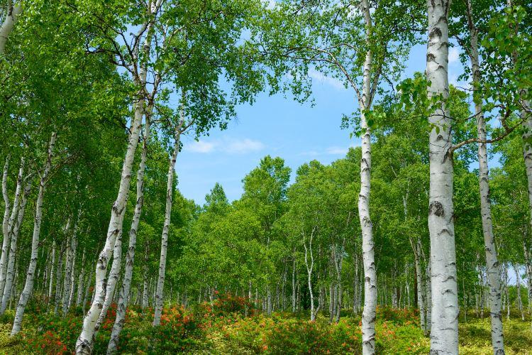八千穂高原自然園2