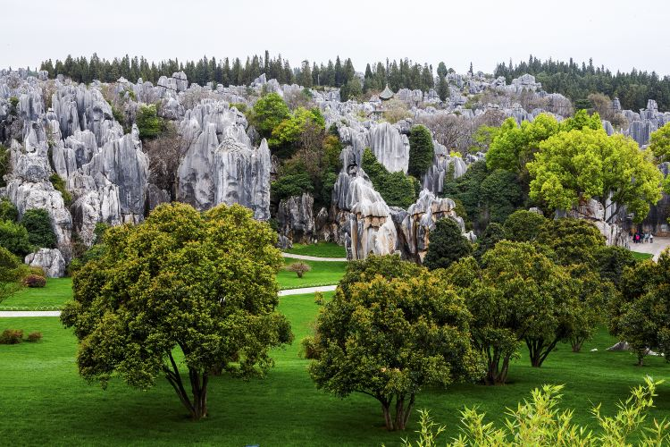 China Stone Forest Karst Geology Museum3