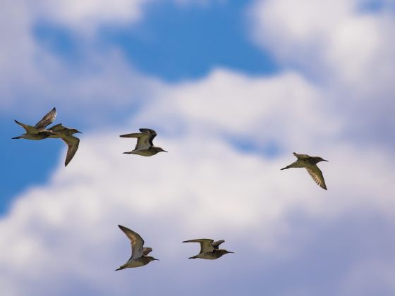 大橋國家級黑頸鶴自然保護區