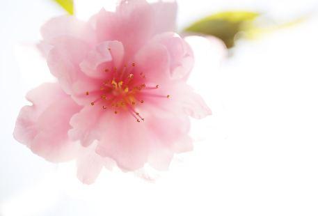 Huatiang Guangxing Baota Romantic Sakura Garden