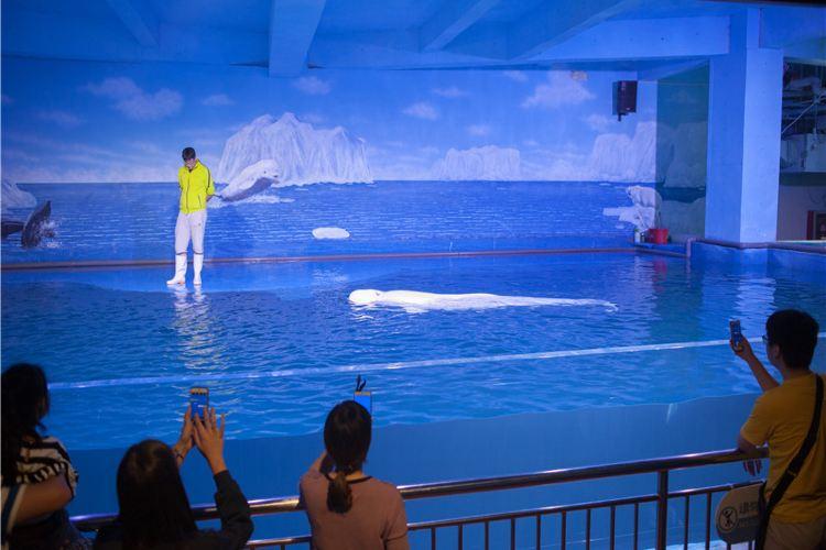 Xuzhou Underwater World4