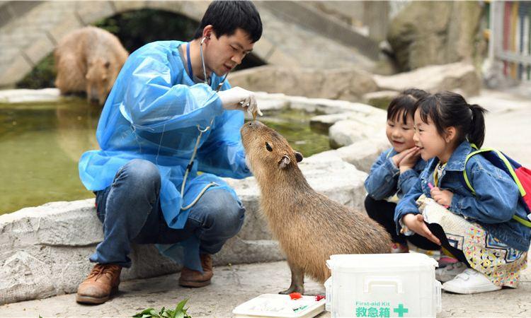Bifengxia Wildlife Park2