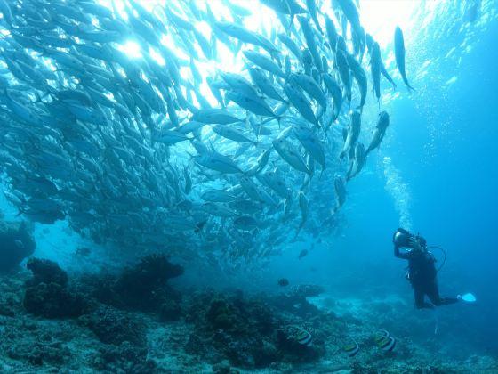 沉靜潛水中心