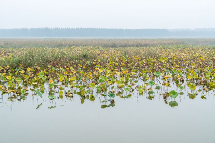 Weishan Lake Thousand Island Wetlands1