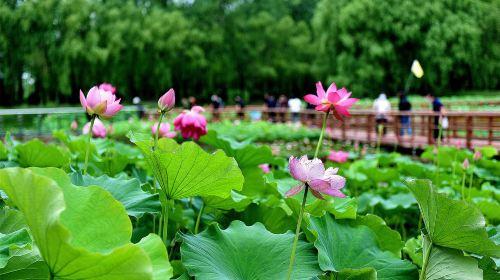 Weishan Wetland Park