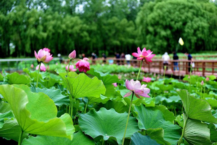 Weishan Wetland Park3