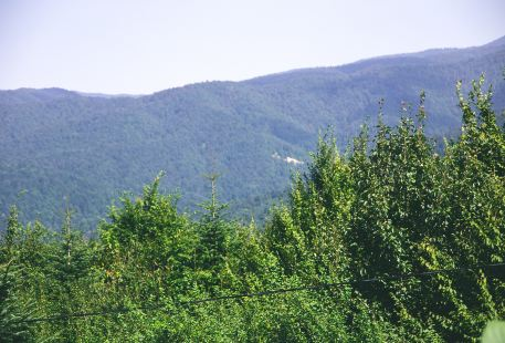 Wild River Mountain Scenic Area