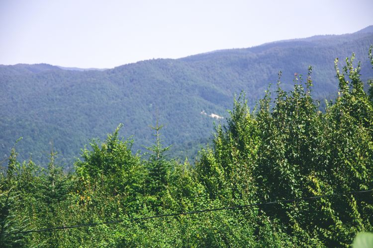小東溝原始森林1