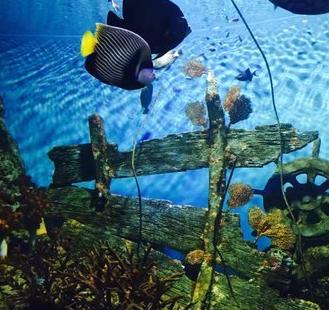 昂蒂布海洋公園