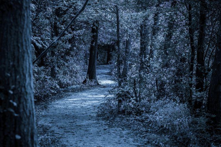 桃花沖森林公園2
