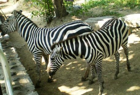 Lanzhoushi Zoo