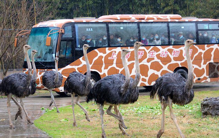 Shanghai Wild Animal Park4
