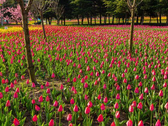 洛陽鬱金香牡丹園