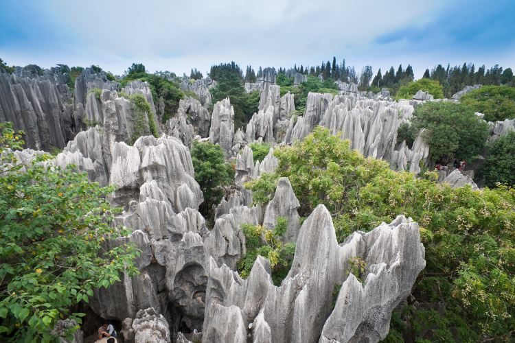 China Stone Forest Karst Geology Museum4