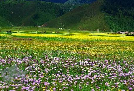 Gesar Flower Grassland