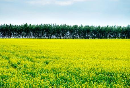 Changyinsha Flower Field