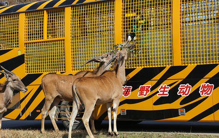 Shanghai Wild Animal Park1