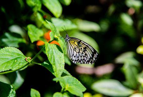 瓦西瓦植物園