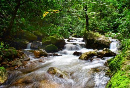 高黎貢山國家級自然保護區